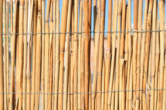 Bamboo or cane fence Royalty Free Stock Photo