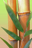 Bamboo cane and leaves Stock Photos