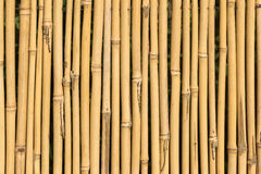 Bamboo cane texture Royalty Free Stock Photo