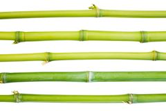 Bamboo Canes Stock Photography
