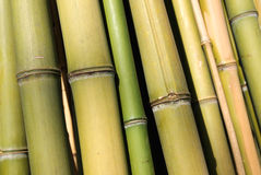 Bamboo canes Royalty Free Stock Photos