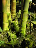 Bamboo canes. Green bamboo canes royalty free stock photo