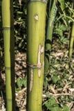 Bamboo canes macro closeup Stock Image