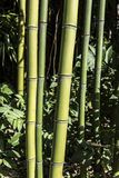 Bamboo canes macro closeup Stock Photos