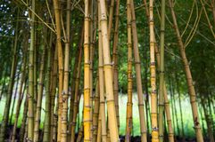 Bamboo canopy Royalty Free Stock Photography