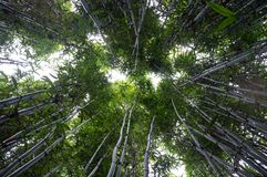 Bamboo canopy Stock Photography