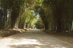 Bamboo Cave Royalty Free Stock Images