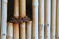Bamboo with chain Stock Image