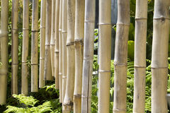 Bamboo Chimes Royalty Free Stock Image