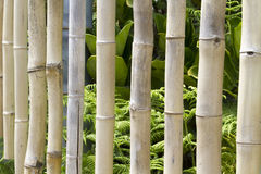 Bamboo Chimes Royalty Free Stock Images