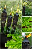 Bamboo Citronella Torch Stock Photos