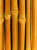 Bamboo a close up Royalty Free Stock Photo