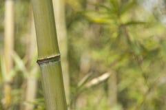 Bamboo close up Stock Photos