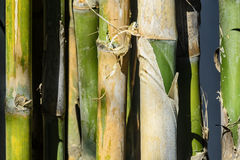Bamboo. Close up of bamboo trees, Philippines Stock Images