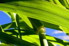 Bamboo Closeup Royalty Free Stock Photos