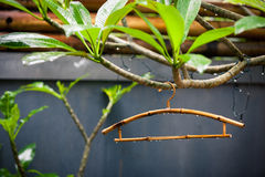 Bamboo clothes hanger on the tree after rain. Bamboo clothes hanger in the tree with drops of rain after a rain in the yard on a summer day Royalty Free Stock Image