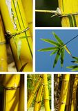 Bamboo collage Stock Image