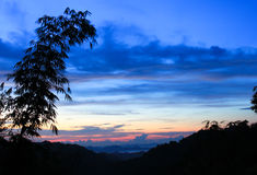 Bamboo and colorful sky at sunrise Stock Photos