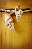 Bamboo and conches Stock Images