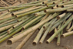 Bamboo for construction. Stock Images