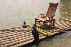 bamboo cormorants удя сплоток Стоковое фото RF