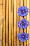 Bamboo with cornflowers Royalty Free Stock Images