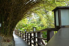 Bamboo covered pathway Royalty Free Stock Photography
