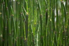 Bamboo Creating Shade Stock Photos
