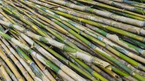 Bamboo crowd plant in the garden. Photography Royalty Free Stock Images