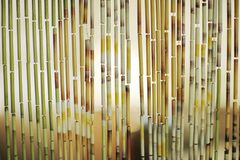 Bamboo curtain background Royalty Free Stock Images