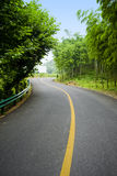 Bamboo and curved road Stock Photo