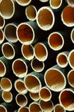 Bamboo cut Stock Image