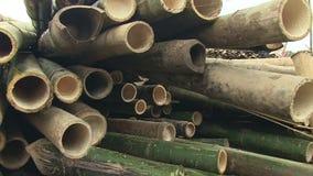 Bamboo, cut,  cambodia, southeast asia stock video