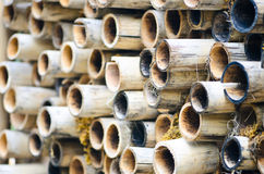 Bamboo cuts. A stack of bamboo cuts Royalty Free Stock Photo