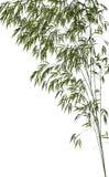 Bamboo - 3D render Stock Photos