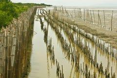 Bamboo dam and Mangrove farm Royalty Free Stock Image