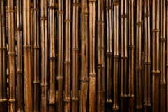 Bamboo Dark Background Stock Photos