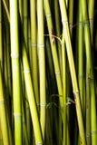 Bamboo delicacy Stock Photo