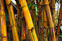Bamboo detail. Close up of bamboo trunk Royalty Free Stock Photo