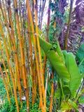 Bamboo Detail Royalty Free Stock Photos