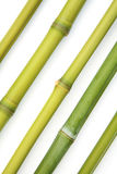 Bamboo diagonal Stock Images