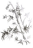 Bamboo, Drawn In East Style Royalty Free Stock Photo