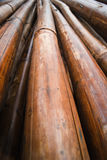 Bamboo. Dry and wet Royalty Free Stock Images
