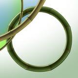 Bamboo element. Background bamboo elements (Frame Custom vector illustration