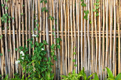 Bamboo fence. With plants and flower Royalty Free Stock Photography