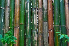 Bamboo fence Royalty Free Stock Images