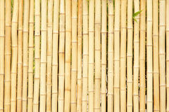 Bamboo fence. Photo good as background Stock Photography