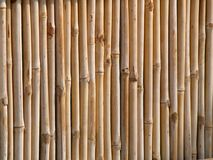 Bamboo Fence. A close up on a bamboo fence Stock Image