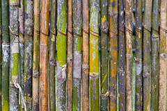 Bamboo fence Royalty Free Stock Photo