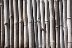 Bamboo fence. A close up of bamboo fence in Guatemala Stock Photos